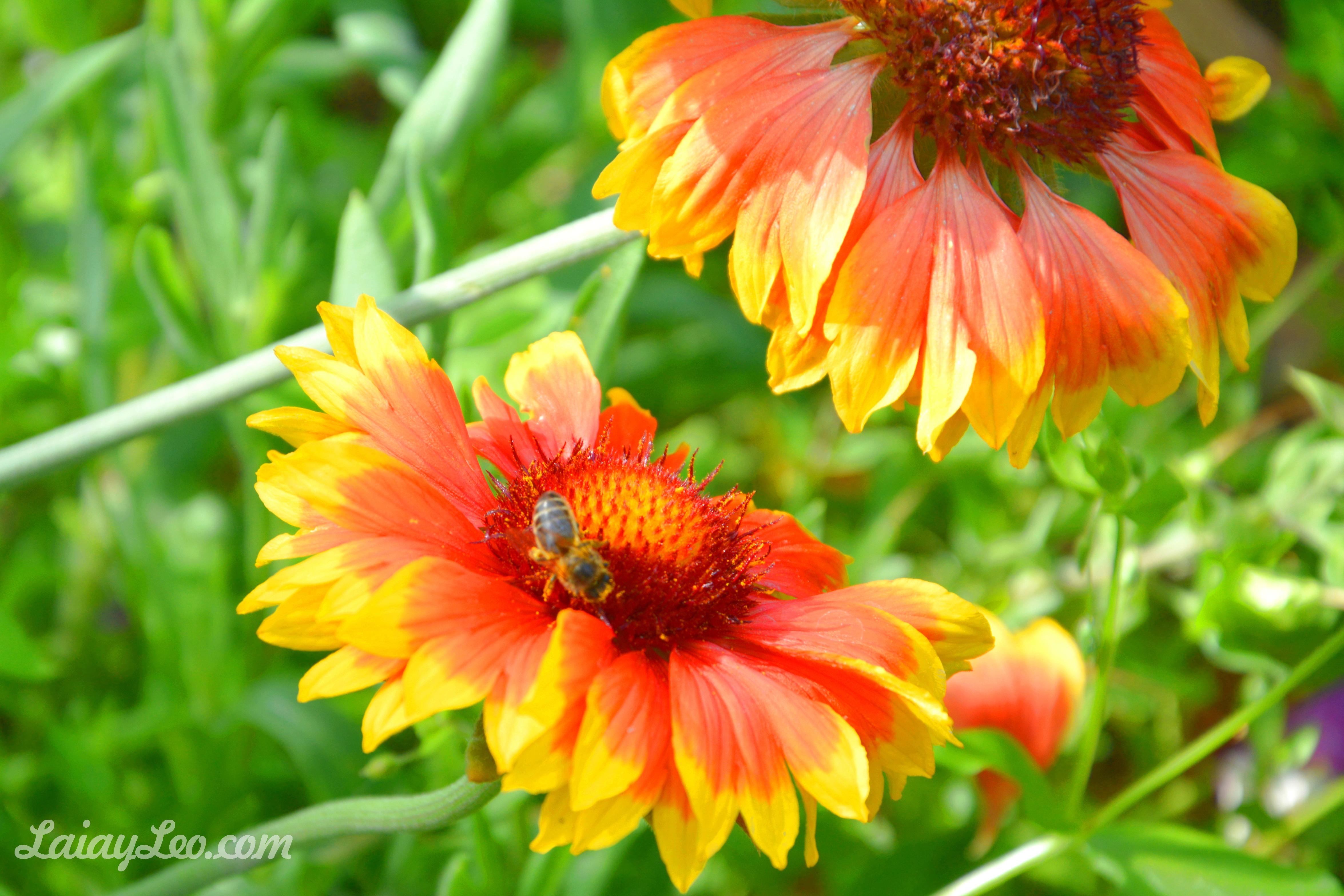 Jardín Botánico Marimurtra 11