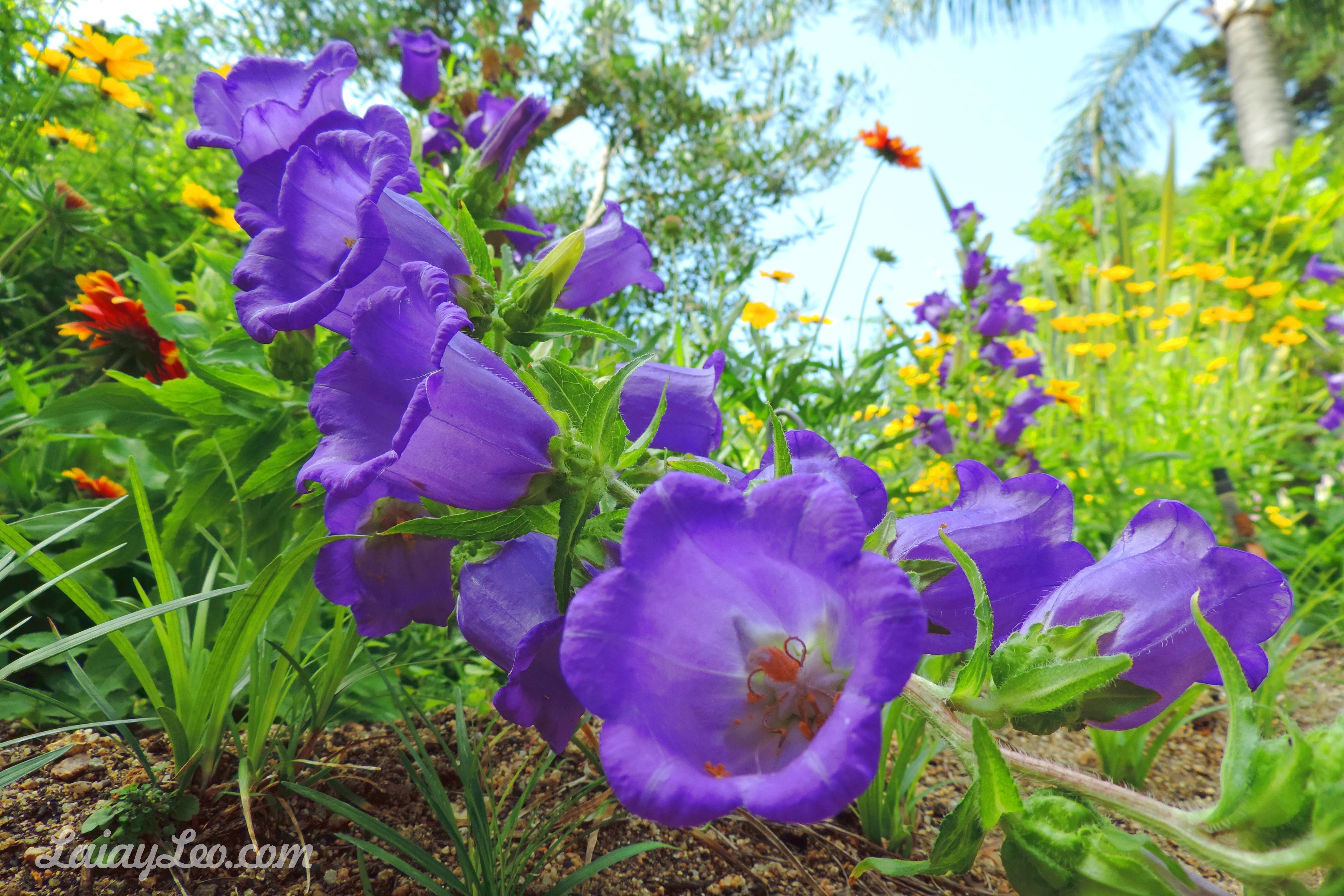 Jardín Botánico Marimurtra 15