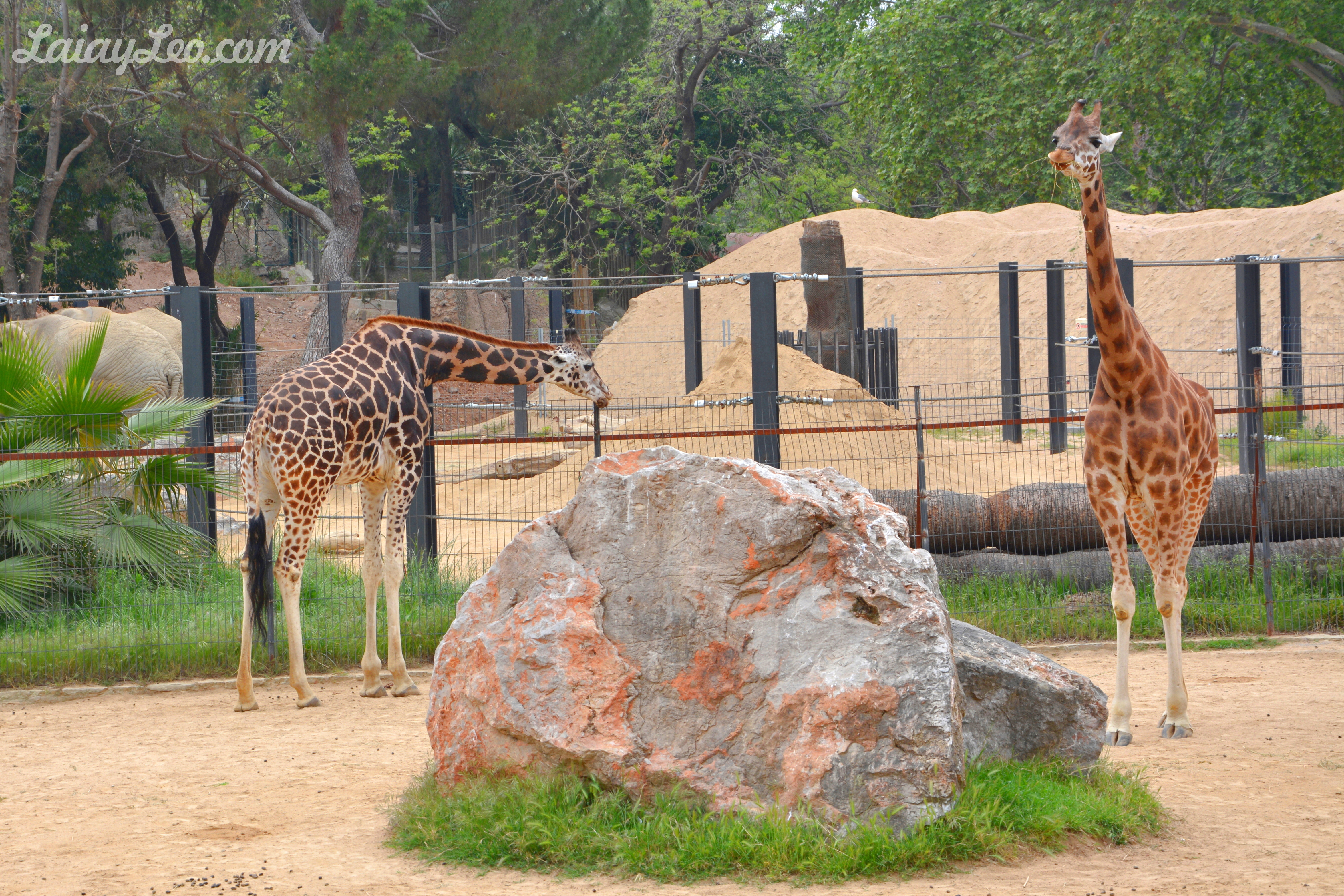 Zoo de Barcelona 09