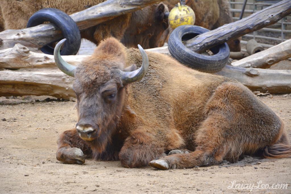 Zoo de Barcelona 10
