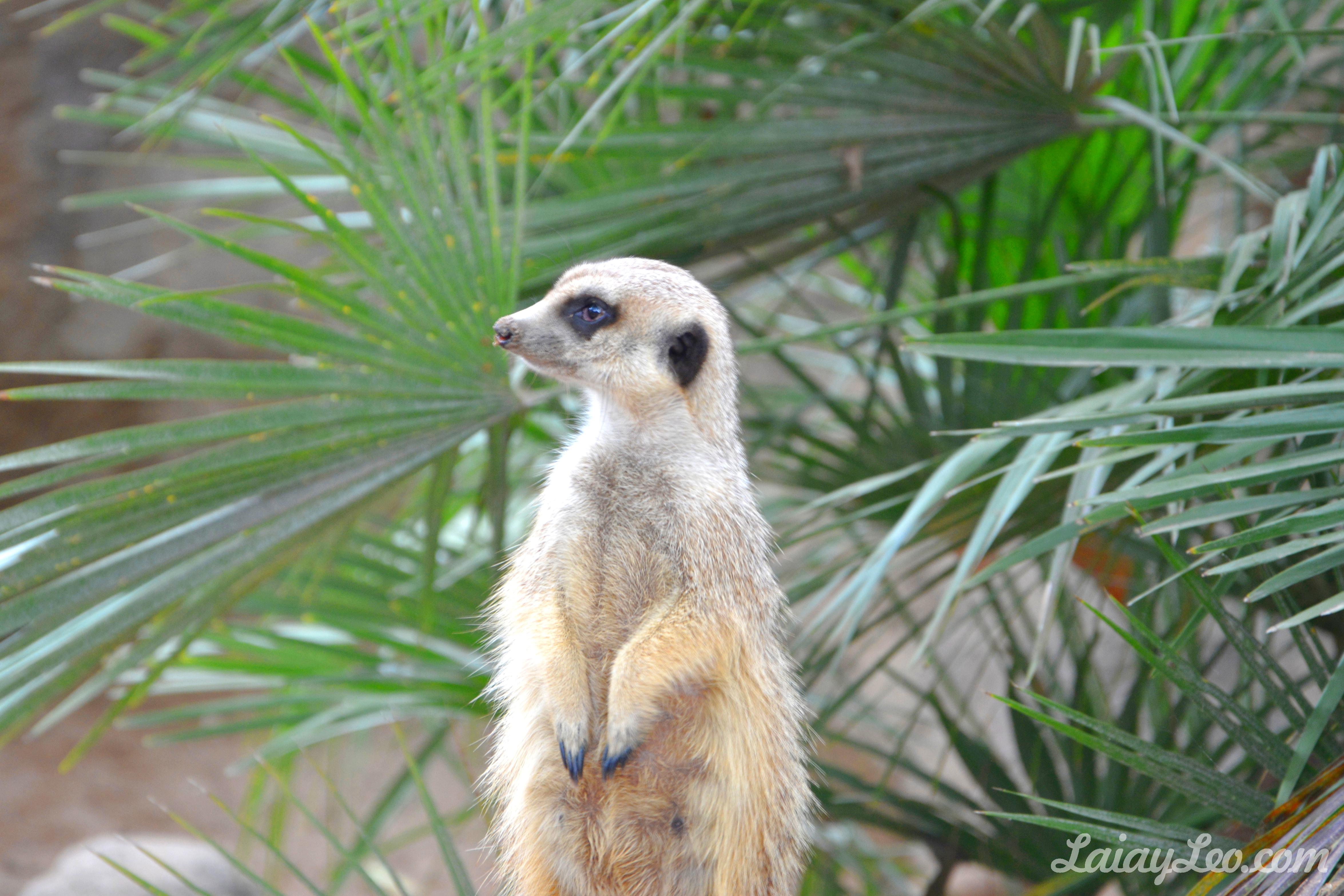 Zoo de Barcelona 14