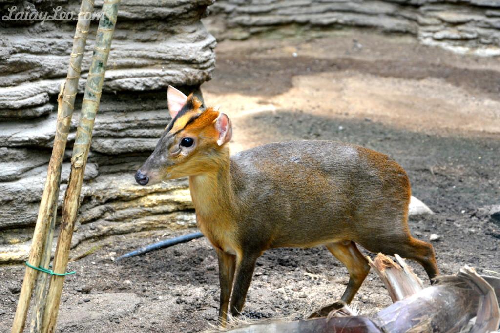 Zoo de Barcelona 15